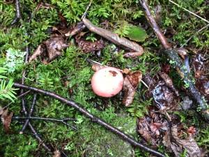 Otter Island Mushroom 1