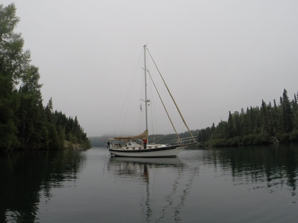 August 30 Gaviidae sitting quietly in Woodbine Harbour