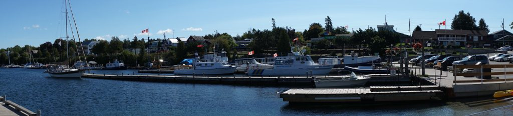 Gaviidae at the Tobermory dock